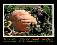2012 BROWNELL'S GIGANTIC PUMPKIN
